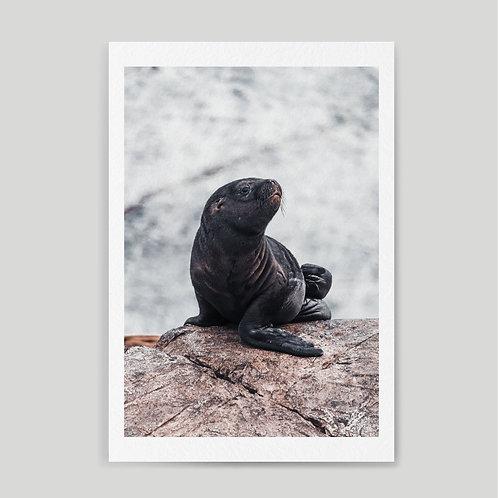 Jainnen: Newborn sea lion in the Beagle channel