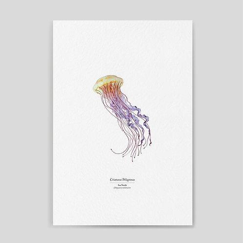 Damianovich: Sea Nettle