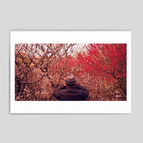 Cornas&Cavia: Japan1