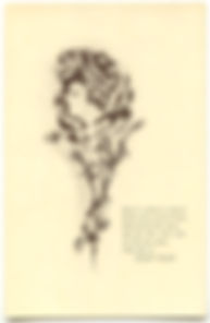 Heres A Flower To PlucK  LEAP YEAR 1912