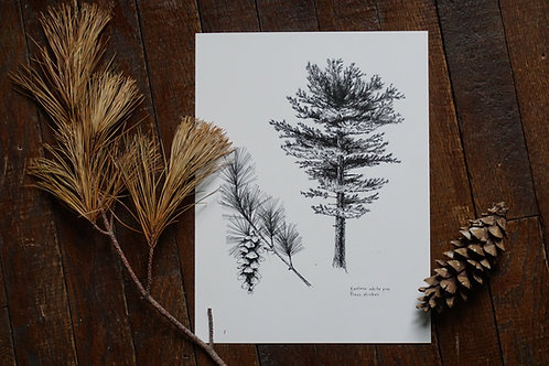 White Pine Tree Print