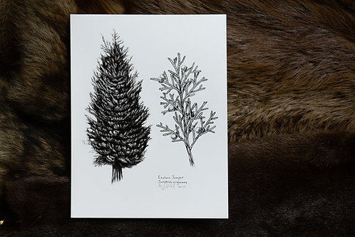 Juniper Tree Print