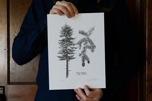 Limited Edition Hemlock Tree Print