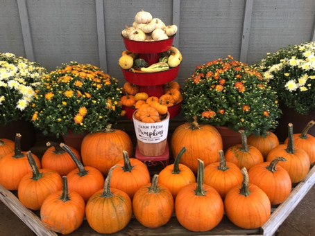 Decorating with Pumpkins for Impact
