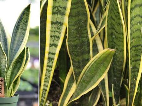 Easy-Care Plants