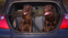 two dogs sitting in a car trunk.jpg