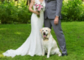 bride groom dog.jpg