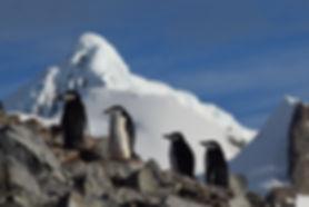 南極ハーフムーン島