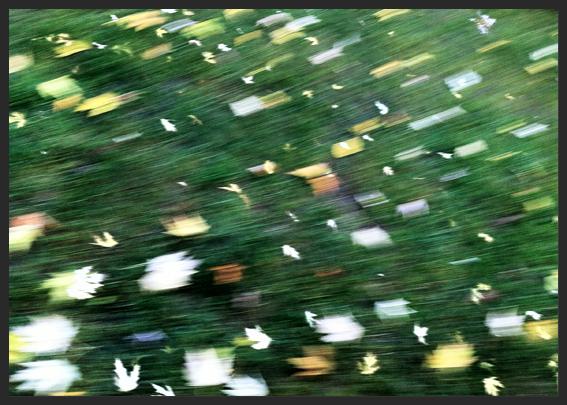 Leaves on Speed 2, Berlin 2012