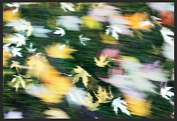 Leaves on Speed 1, Berlin 2012