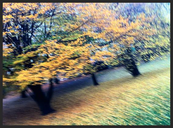 Facing Fall, Berlin 2012