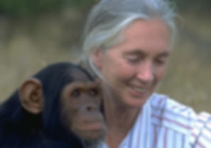 jane-goodall-feature.jpg