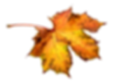 autumn-1768366_960_720.png