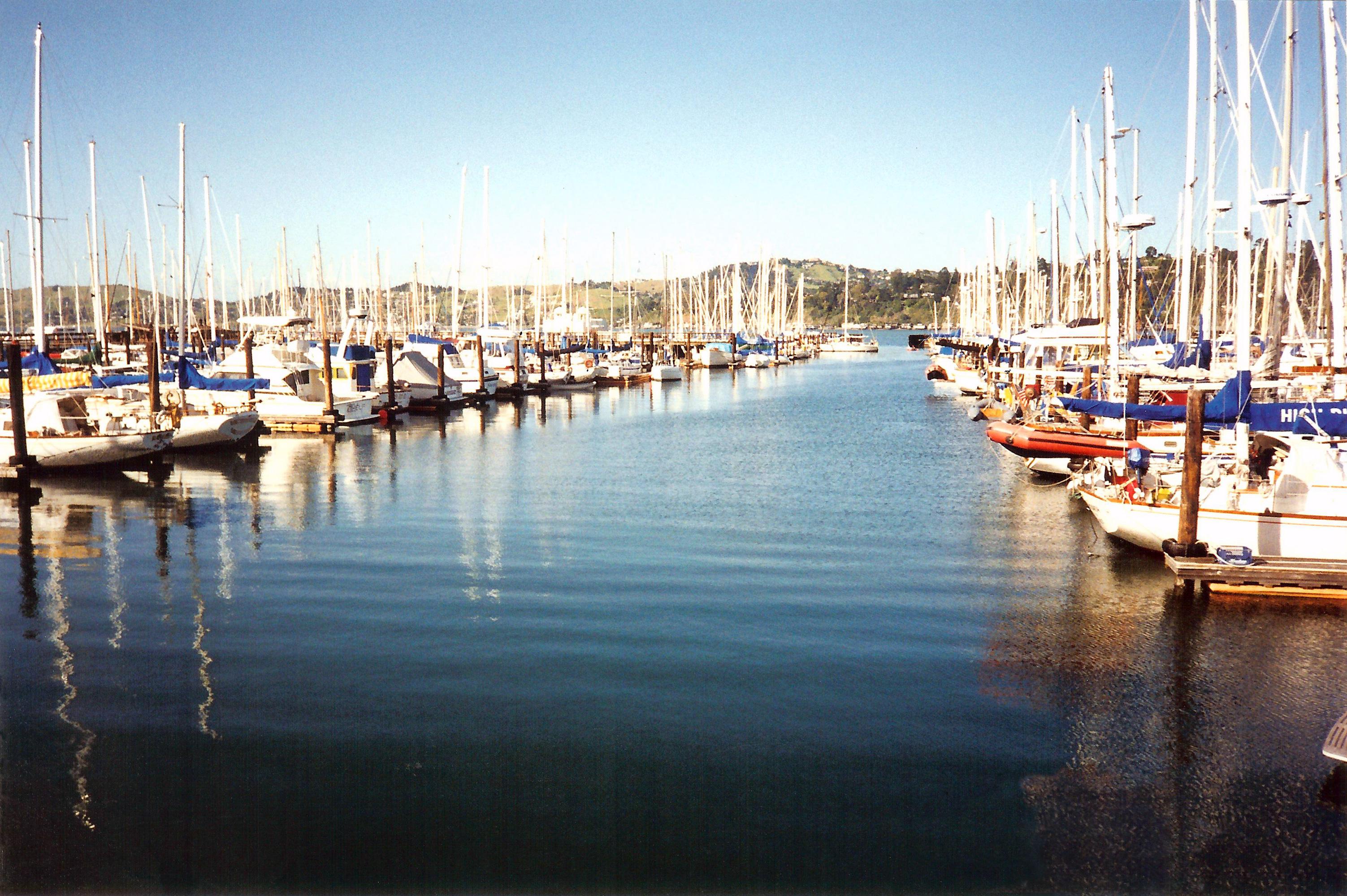 Tiburon-harbor