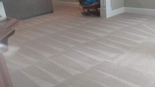 Freshly cleaned carpeting