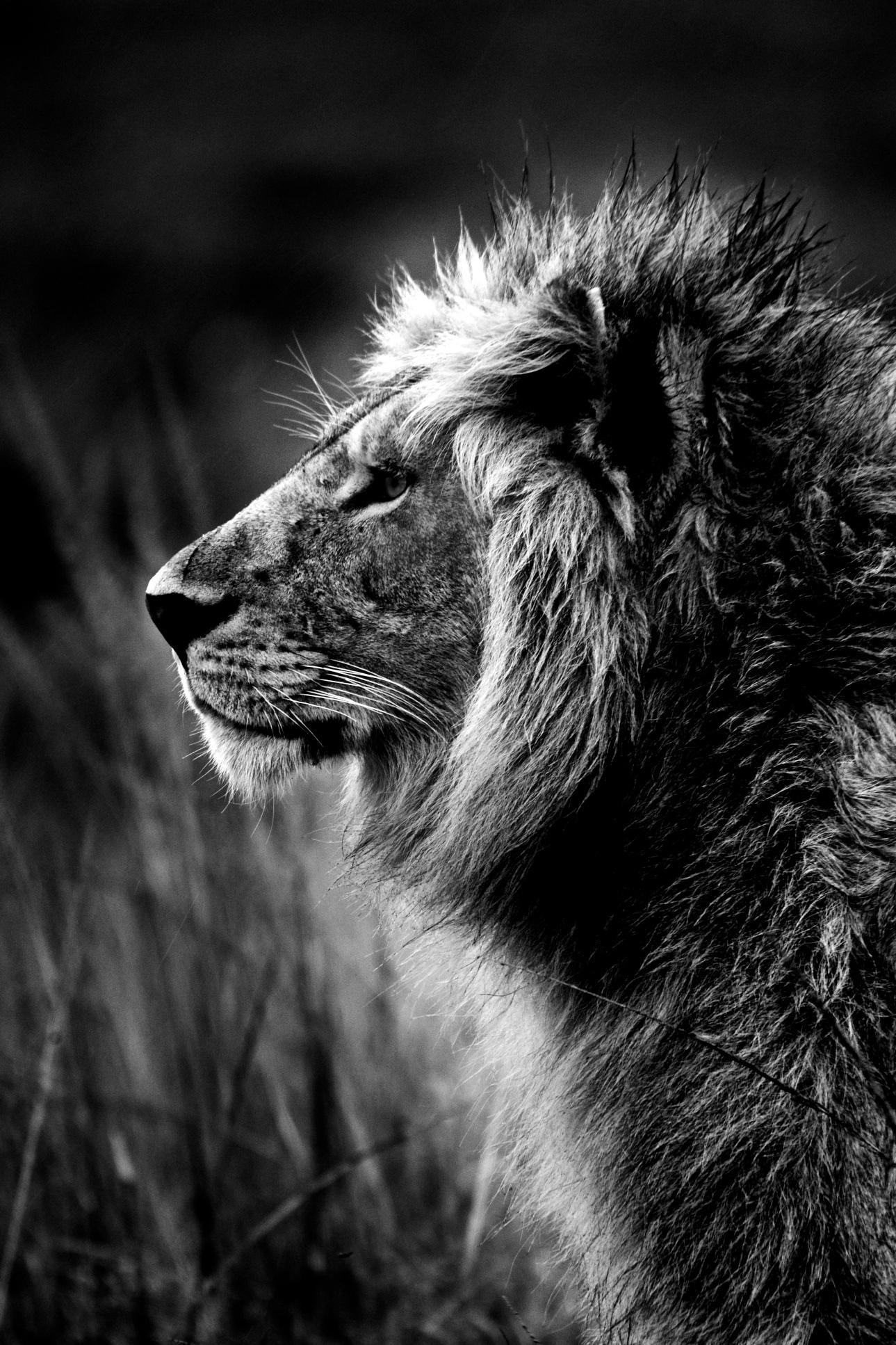 Portrait du roi