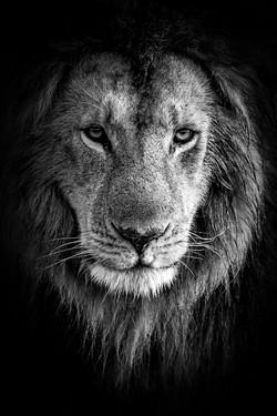 La nature en noir et blanc - Coeur de li