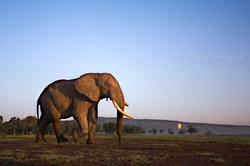 L'éléphant et la mongolfière