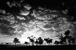Ombres d'arbres