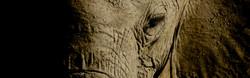 Dégradé d'éléphant