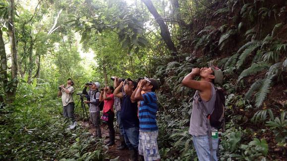 Oropendolas Negras on Mirador Trail