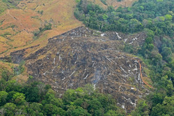 Pastures burned out of forest in Rio Hondo