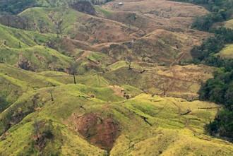 Massive deforestation of Wounaan territory.