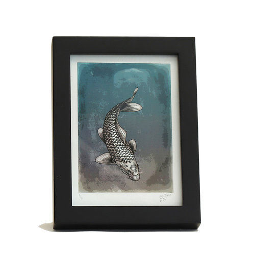 Koi Carp Ltd Edition (Framed Print)