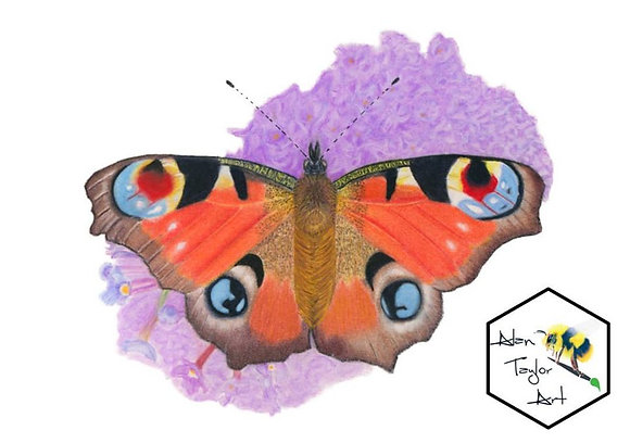Peacock Butterfly Print (A5 mounted to suit A4 frame)