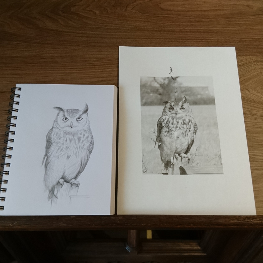 Owl in progress