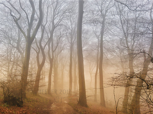 Misty Woods (Greeting Card)