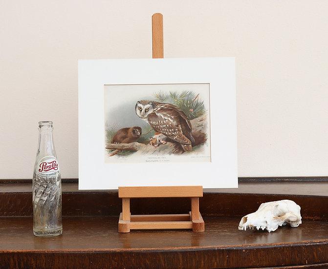 Original Natural History Owl Print (mounted print)