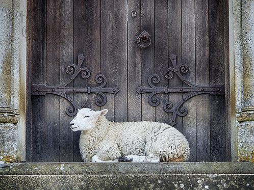 Sheep at St Mary's (Greeting Card)