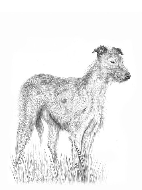 Hairy Lurcher (Greeting Card)