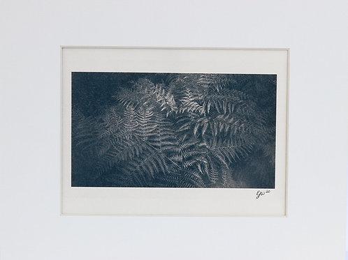 Toned Cyanotype of Ferns
