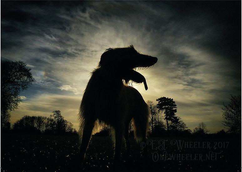 Wolfman Jack (Greeting Card)