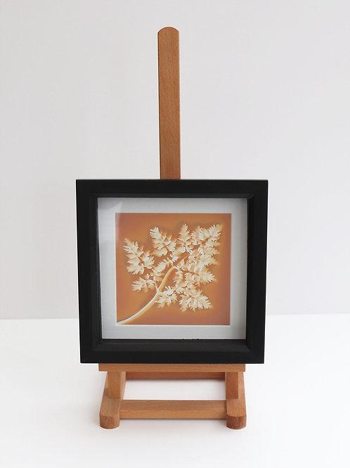 Lumen Print in Deep Box Frame (Framed lumen print)