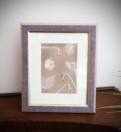 Light Lumen (Framed lumen print)