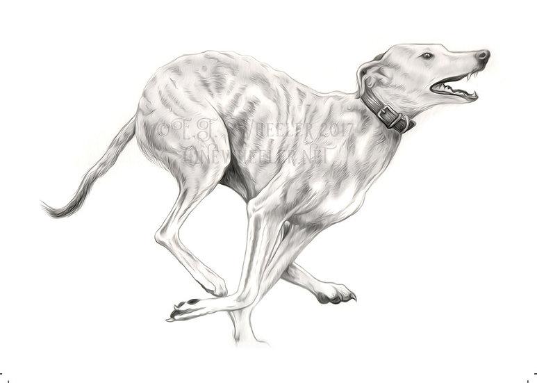 Running Hound (Greeting Card)