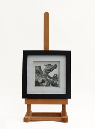 Cheeky Cows (Framed Print)