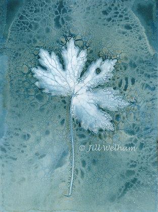 Astrantia Leaf Cynotype Original by Jill Welham