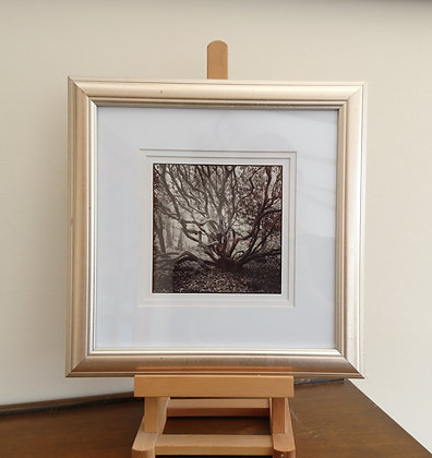 RhododendronTree (Framed Print)
