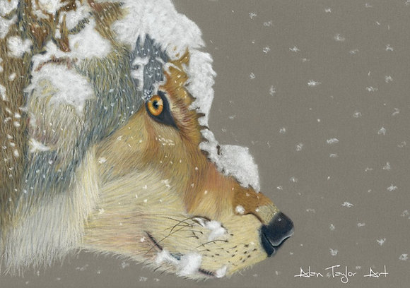 Snow Wolf Print Small (Mounted Print)