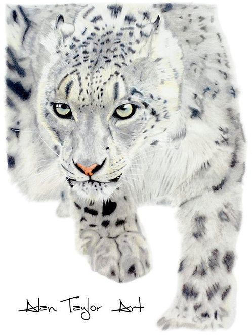 Snow Leopard Print (A5 mounted to suit A4 frame)