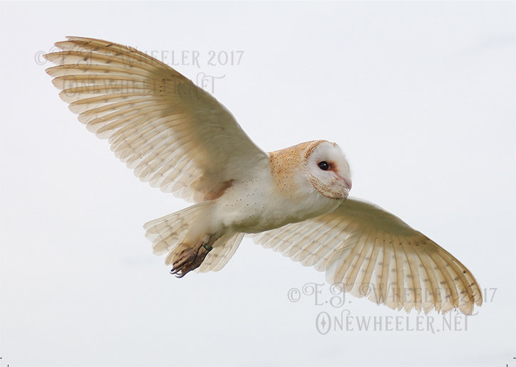 Silent Flight (Greeting Card)