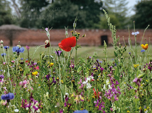 Wild Flower Meadow (Greeting Card)