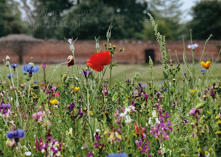 Wild Flower Meadow (Greeting Card)