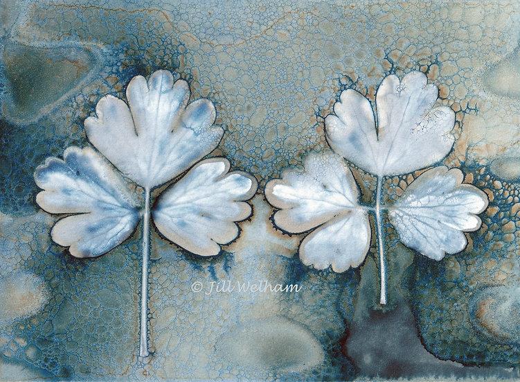 Aquilegia Leaf Duo Cynotype Original by Jill Welham
