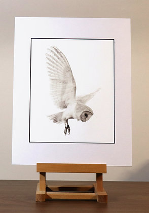 Barn Owl mounted canvas print
