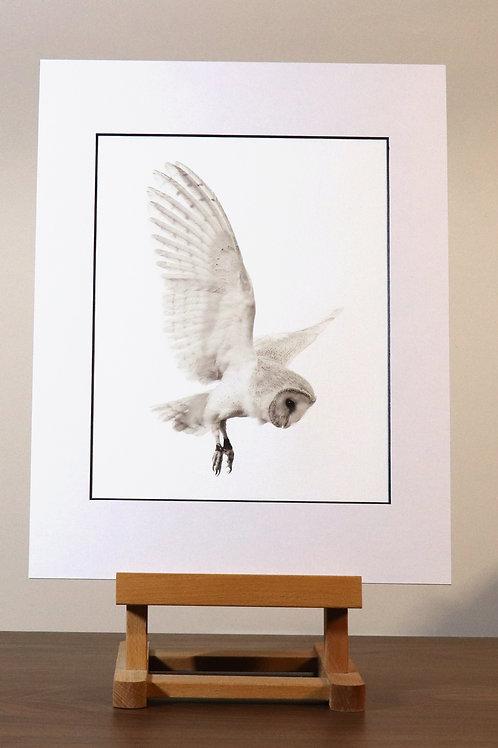 Barn Owl mounted canvas print